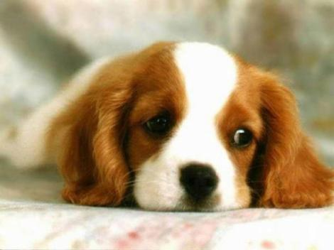 Don't have sad face like sad puppy - Travel now! (Image Credit: IUPUI ALISS)