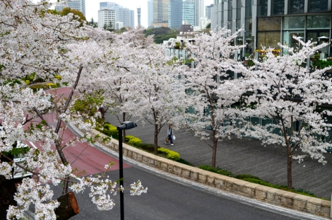 Tree lined boulevard of Tokyo Midtown