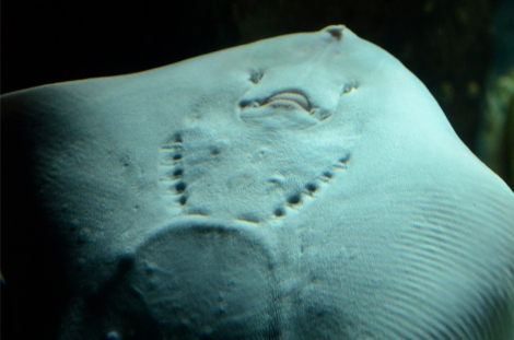 Up close and personal with a ray