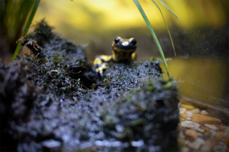Up close with a very tiny, but very dangerous amphibian